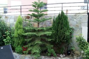 GREENGO-Tenerife-gardens-15
