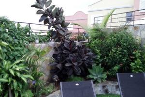 GREENGO-Tenerife-gardens-16